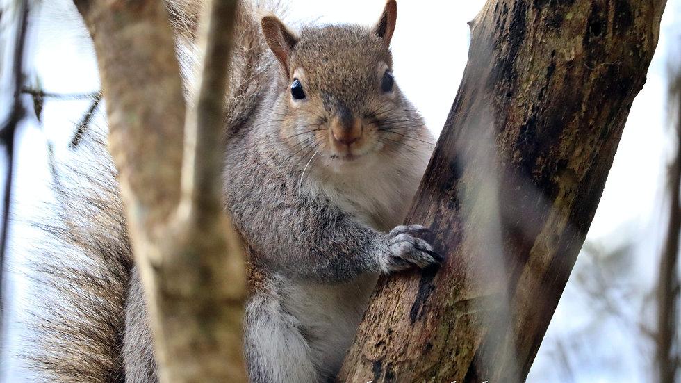 Blank Card - Wildlife/Nature Print - Squirrel2