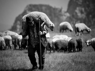 Tomorrow's Shepherd's Today - A Design Plan for Future Leadership