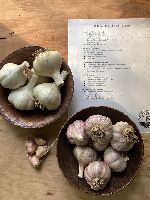 Seed Garlic, for planting!