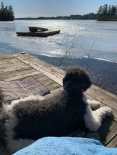 Wayward dock soon to be released