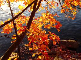 Fabulous Fall Colour.jpg