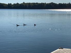 A Sunday Looney cruise on Pike Lake