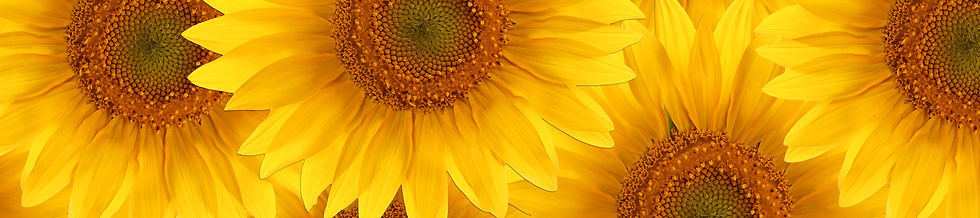 Sunflower - GinnyPreneur.jpeg