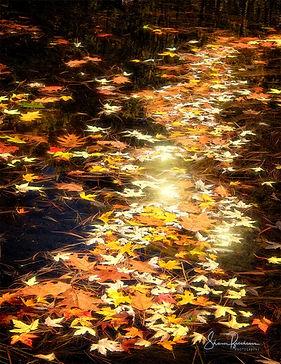 leaves6.jpg