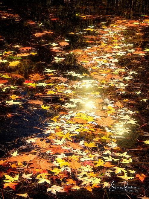 "Leaves Aglow! 12"" x 18"" Dry Mount Print"