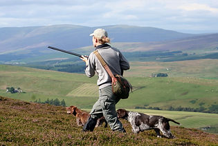 Grouse, shooting, scotland, highlands, walk up, dog