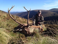 red, deer, stalking, scotland, highlands