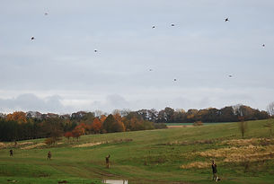 driven, shooting, pheasant, partridge, birds, england,