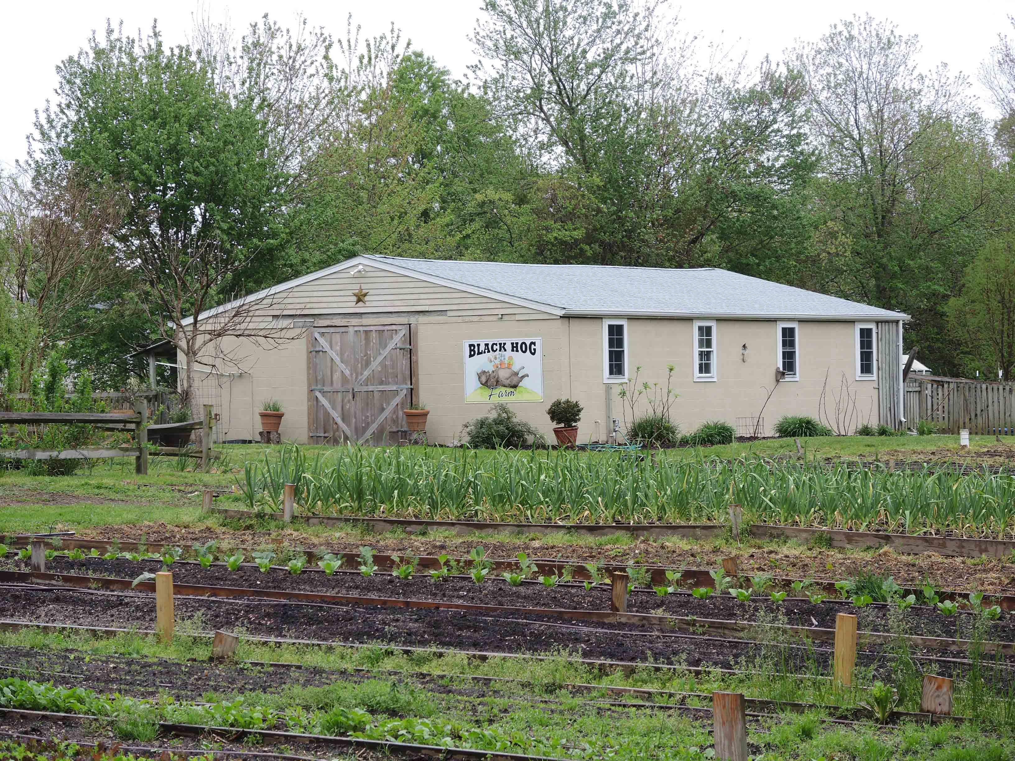DM - Black Hog Farm.jpg