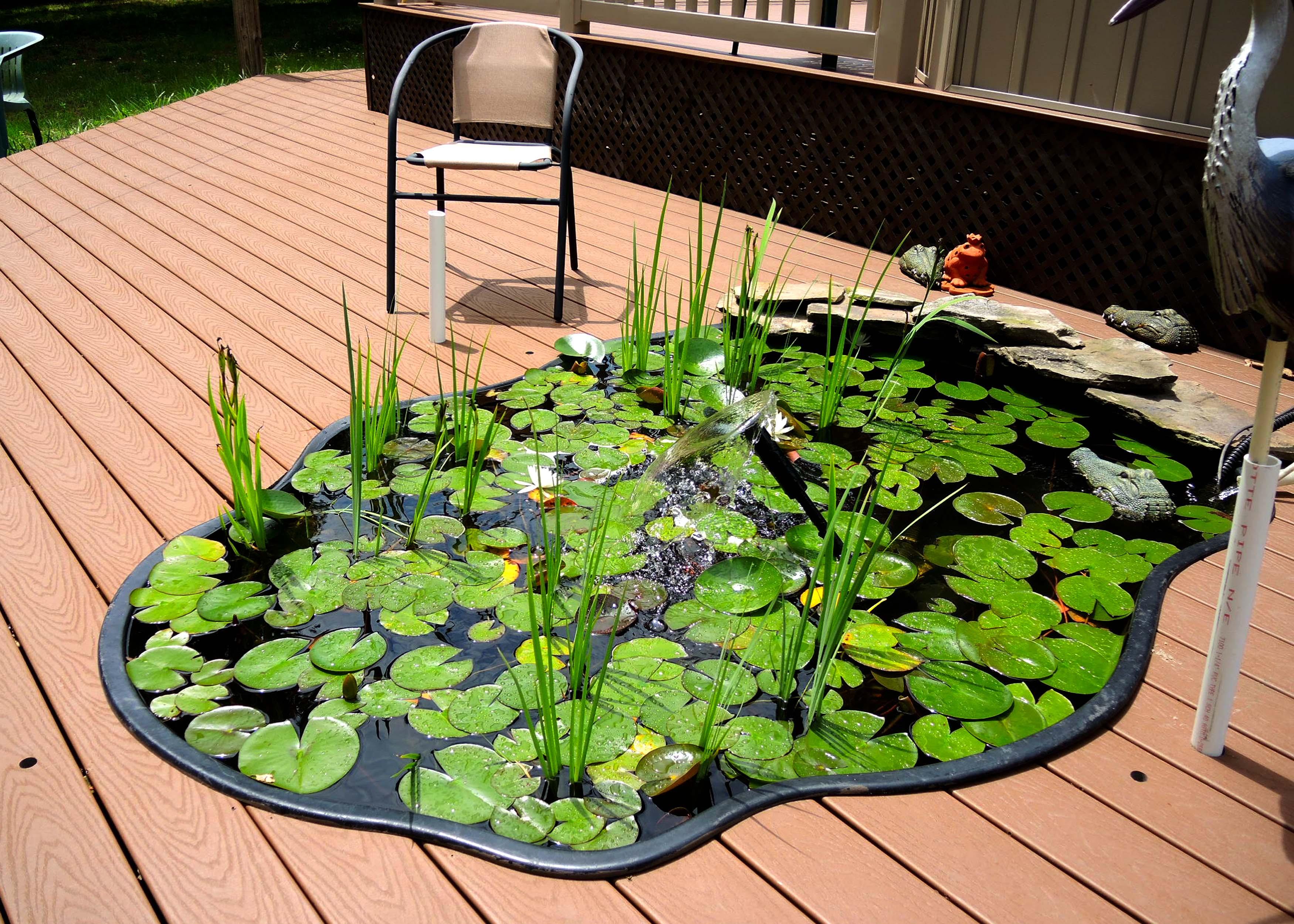 DSCN0006 - lily pond.jpg