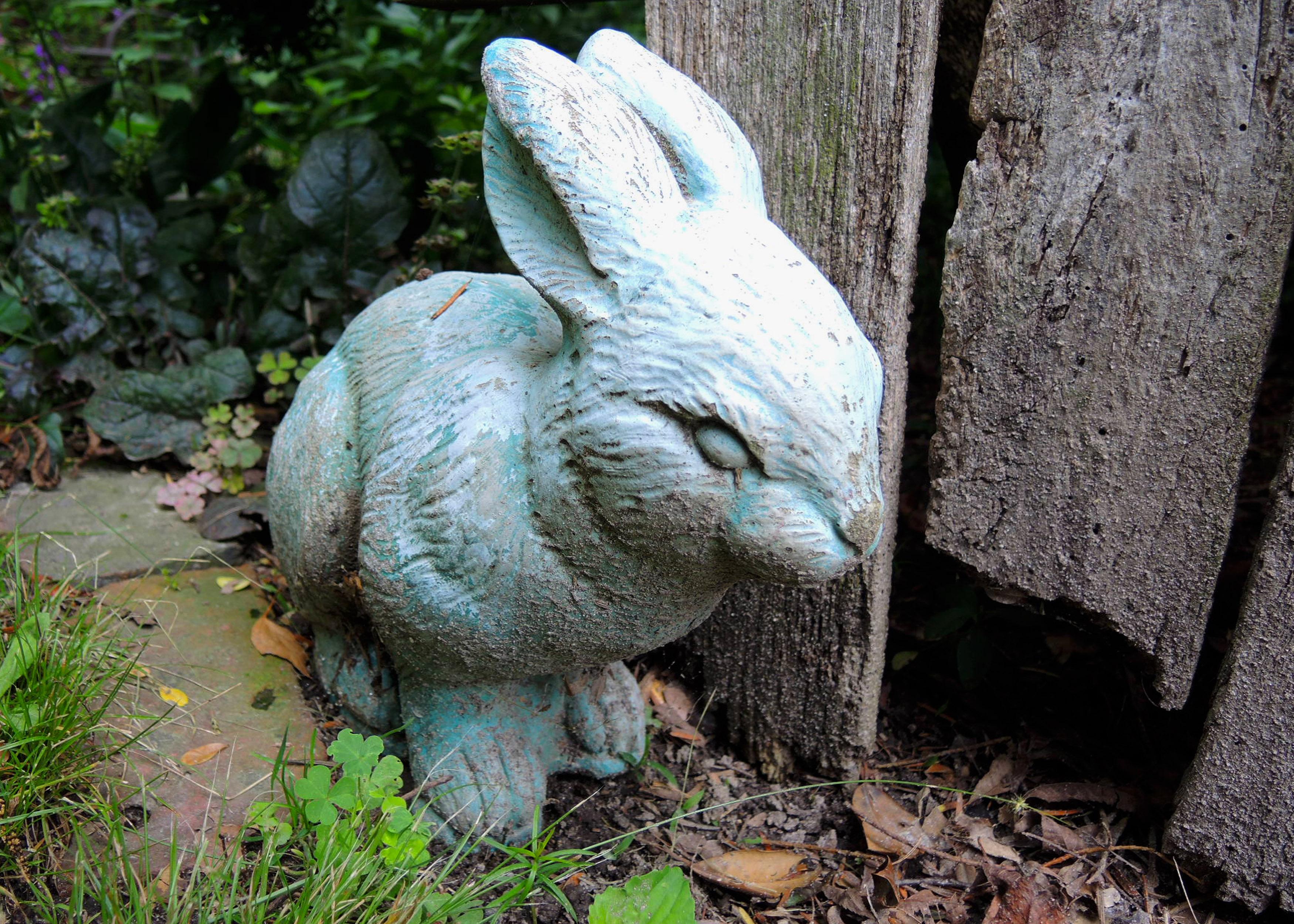 DSCN0049 - Dennis' bunny.jpg