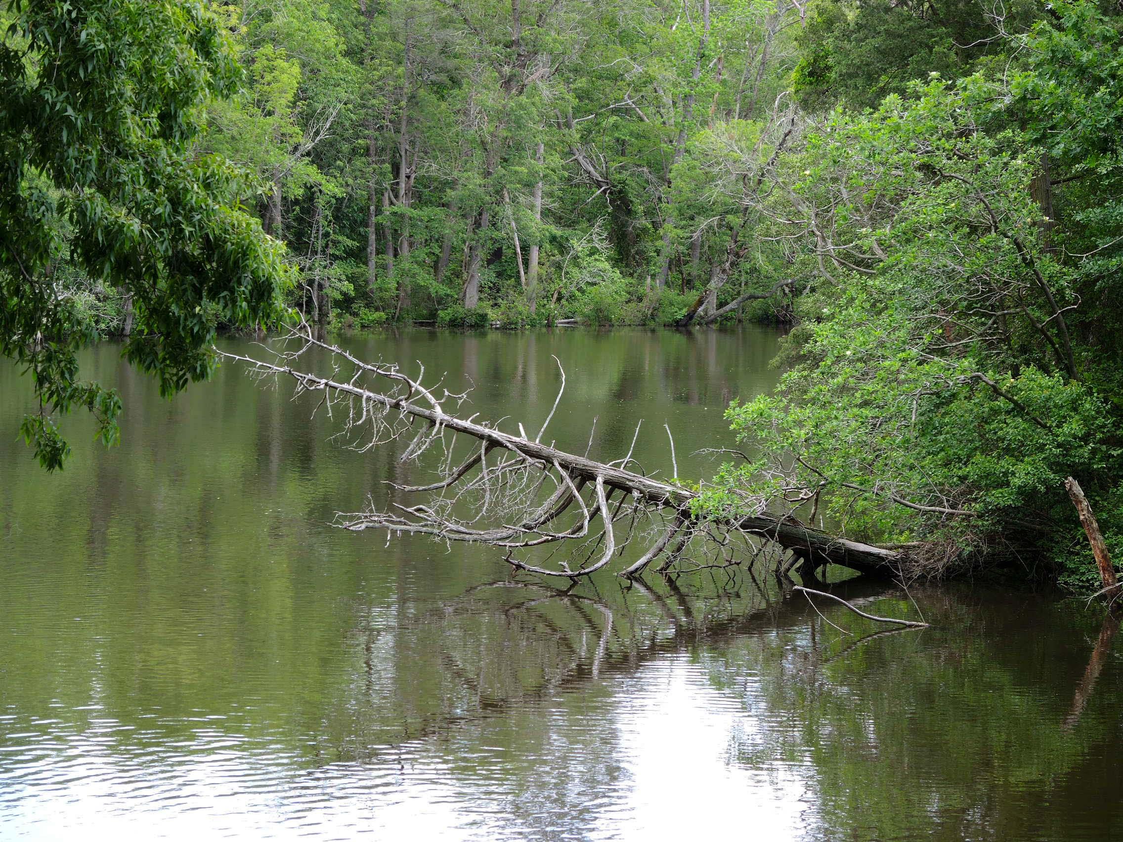 DSCN9892 - Sandi - fallen tree.jpg