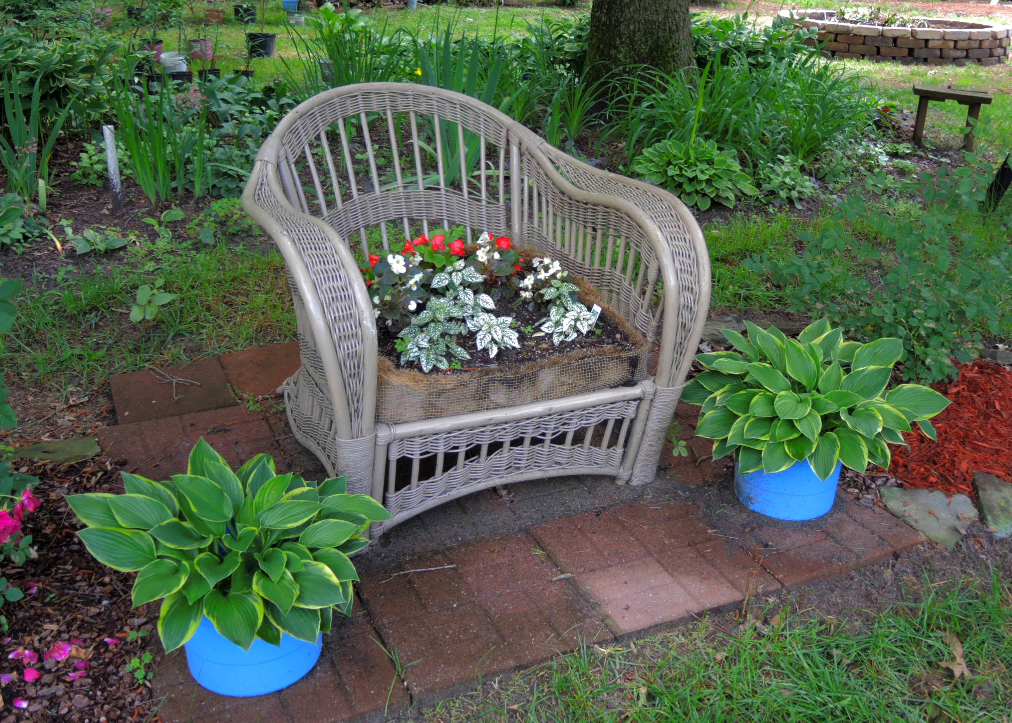 DSCN0002 - chair planter.jpg