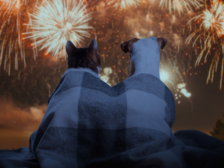 4 Paws Mobile Spa's Tips for Pet Owners - Firework Precautions