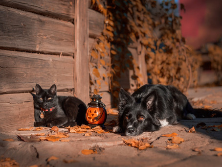 How Can You Keep Your Pets Safe During Halloween?