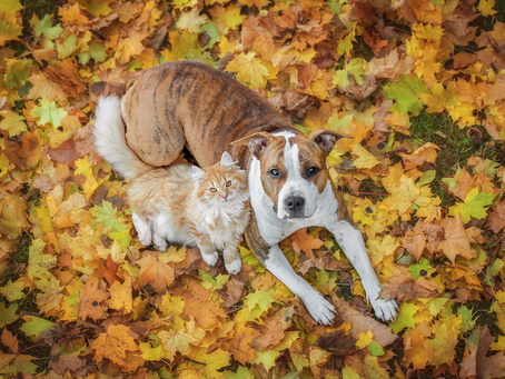 On Our Radar – Pet Products For Autumn