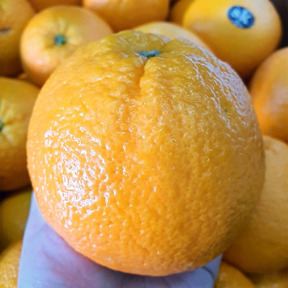 US Sunkist Navel Orange Jumbo 6s