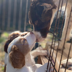 Jessie and Puppy