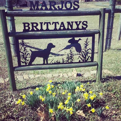 Marjo's Brittanys