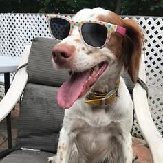 Roxy (CH Marjo's Party like a Rockstar JH)