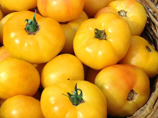 Tomat Golden Queen