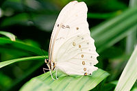 Bride Butterfly_edited.jpg