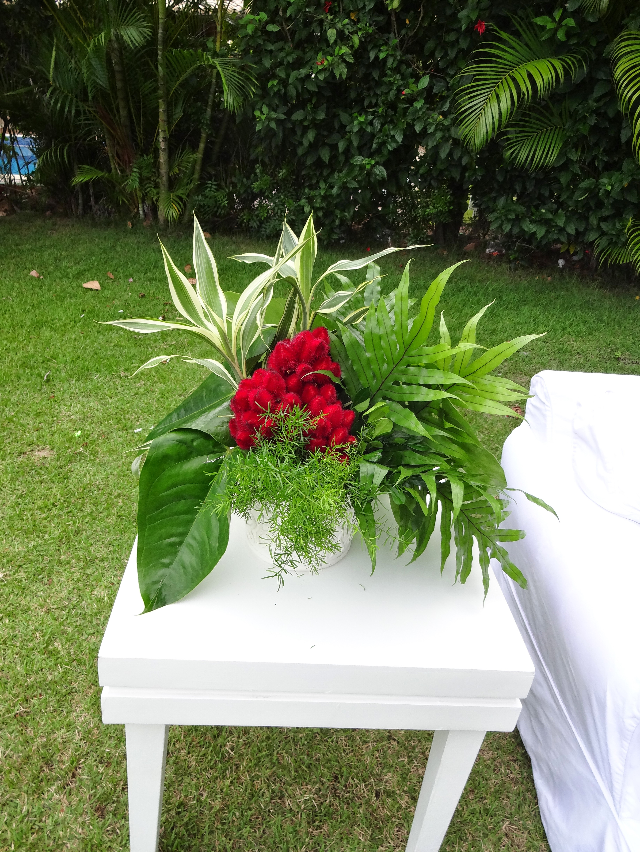 Tropical vermelho