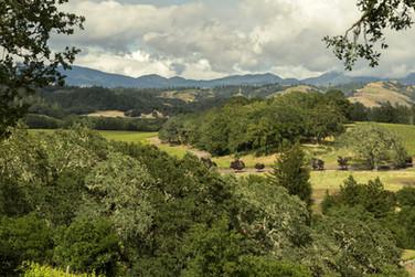 Warnecke Ranch