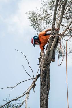 Pete in Tree - Keppera Job 3
