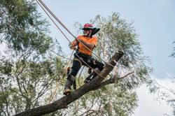 Pete in Tree - Keppera Job 1