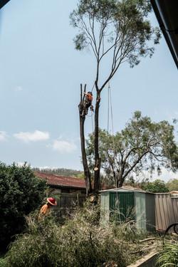 Pete in Tree - Keppera Job 4