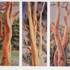 Trees Triptych