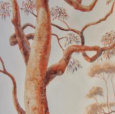 Angophora Arabesque