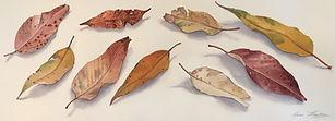 Gum Leaves Triptych, 3 x 22cm x 62 cm, W