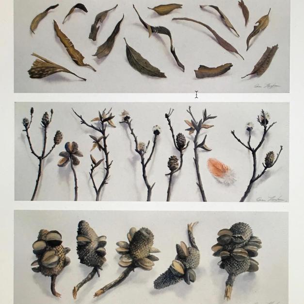 Bushfire Triptych