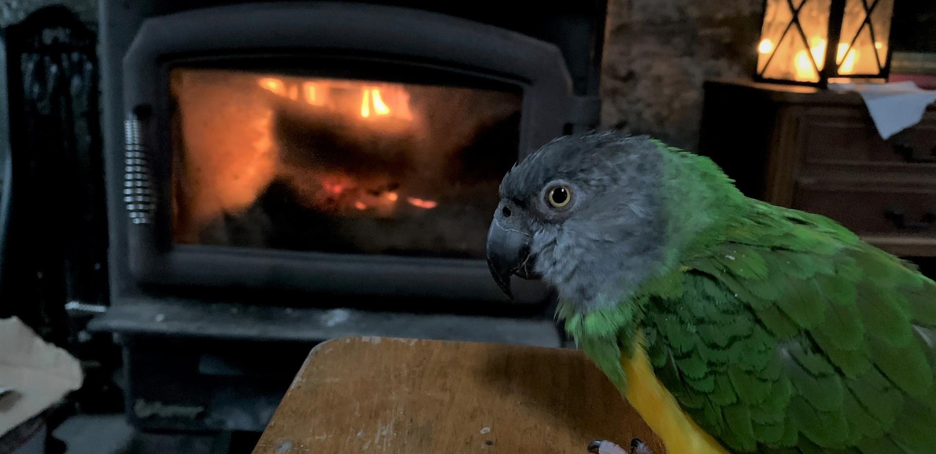 Parrot Guest.jpg