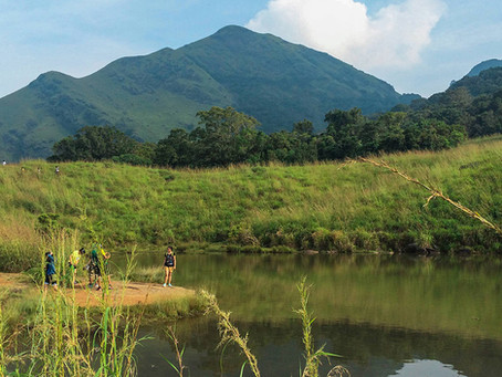 WAYANAD - The Green Paradise