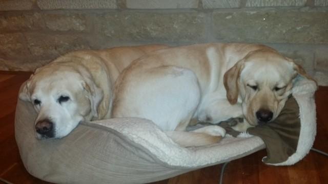 duvet dogs