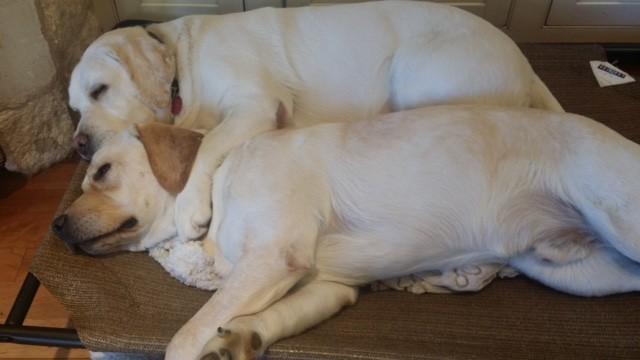 sleeping duo