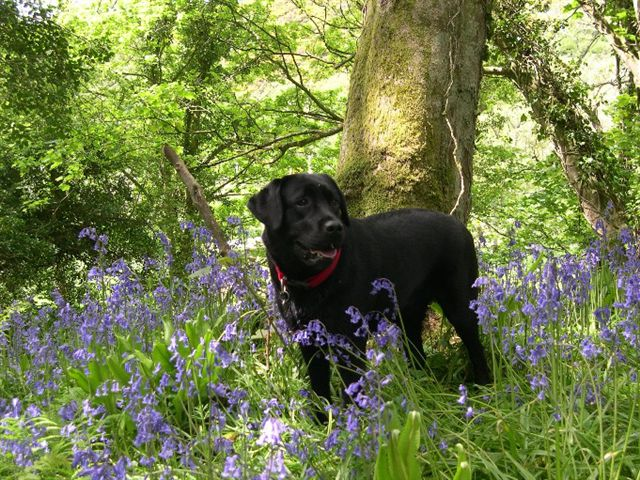 Wendy in bluebells
