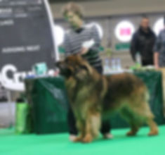 maalo at crufts stack.jpg