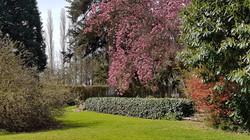 magnolia jardin