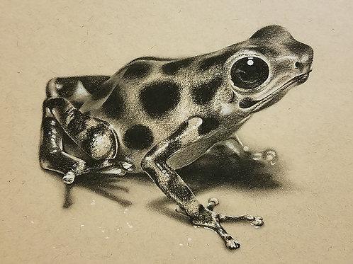 Poison Frog Art Print