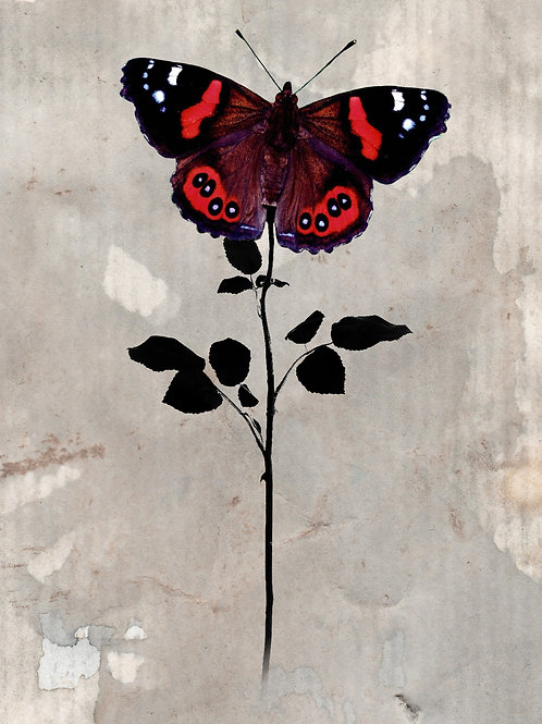 Long Stem Butterfly Art Print