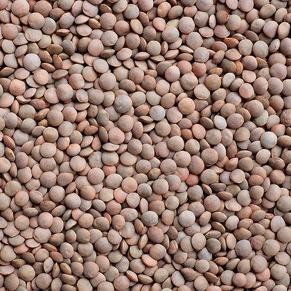 Lenteja orgánica a granel, desde 1g