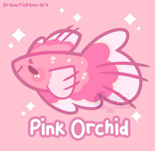Pink Orchid Betta