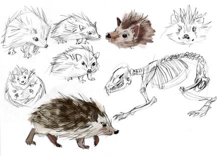 Hedgehog Studies