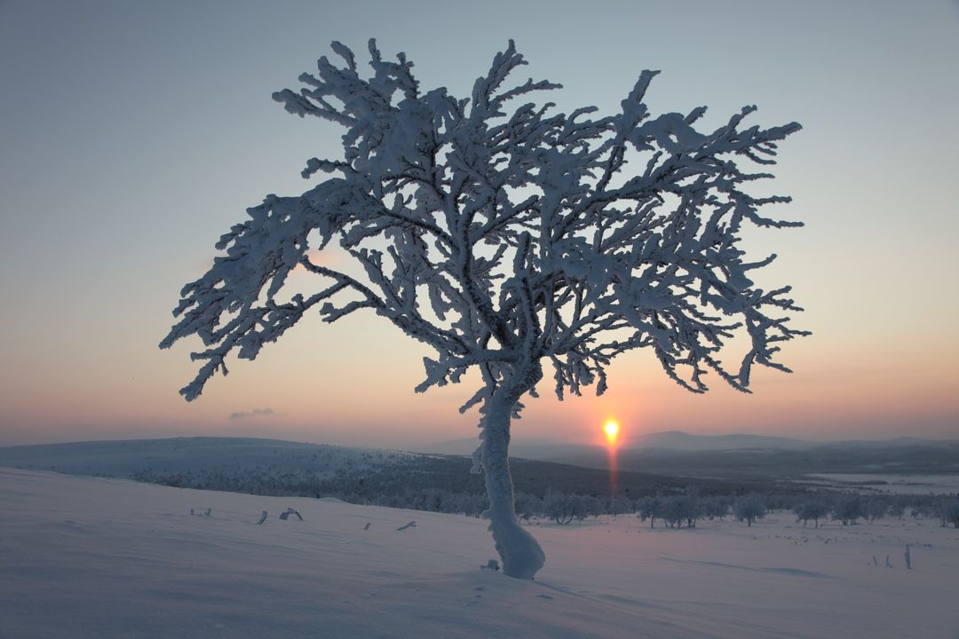 Piesvaara Lapland winter day
