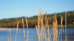 Teno river summer