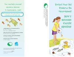 Illustration & design of brochure
